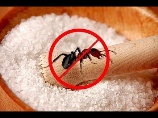 """""""Điên tiết"""" vì kiến bâu đầy lọ đường, hãy dùng ngay 4 cách cực hay này để đuổi chúng đi - 1"""