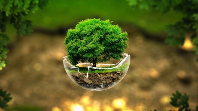 Giới văn phòng theo đuổi xu hướng sống xanh bền vững - 1