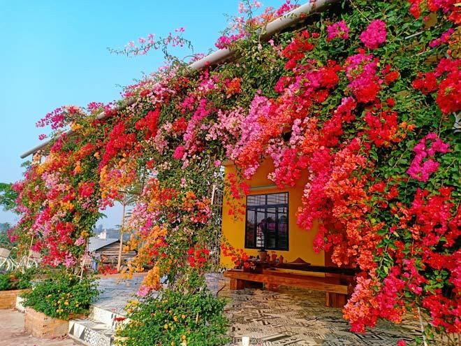 Chàng trai Đắk Lắk bỏ việc về trồng hoa cho vợ ngắm suốt 365 ngày trong năm - 1