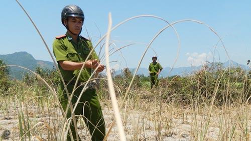 Điều tra khí lạ làm hàng loạt cây chết khô - 1