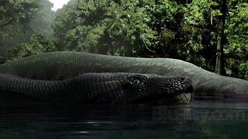 Loài rắn nặng hơn 1 tấn - 1