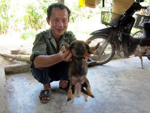 Kỳ lạ chó 6 chân, 2 bộ phận sinh dục - 1