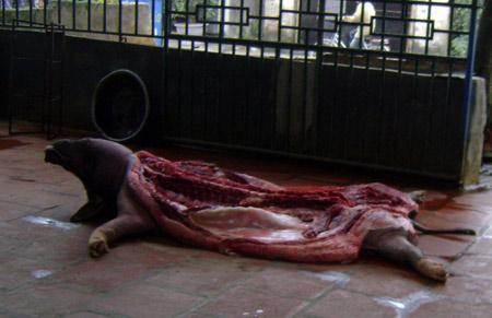 Đường dây tiêu thụ lợn chết dịch (P2) - 1