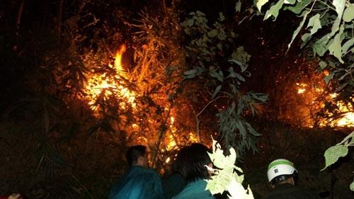 Sét đánh gây cháy rừng ở Đà Nẵng - 1