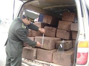 Bắt 2 vụ vận chuyển gần 1,4 tấn gỗ sưa - 1