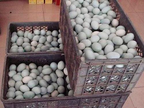 TQ: Phát hiện trứng muối có chất gây ung thư_ - 1