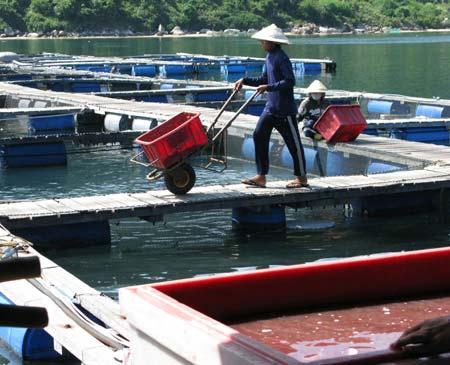 Người TQ nuôi cá trái phép ở Vũng Rô - 1