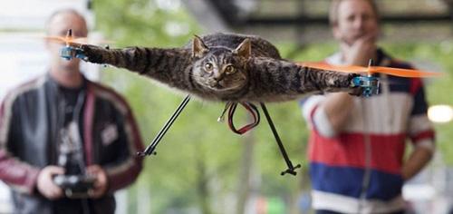 Chiếc trực thăng làm từ xác mèo - 1