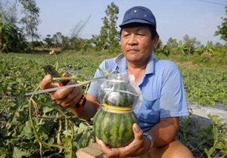 Kiểu dáng trái cây: Mất độc quyền vì lộ - 1