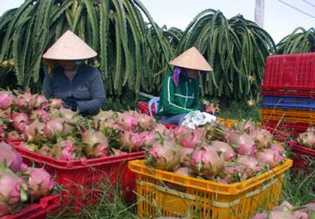 Trái cây lo giảm xuất khẩu - 1