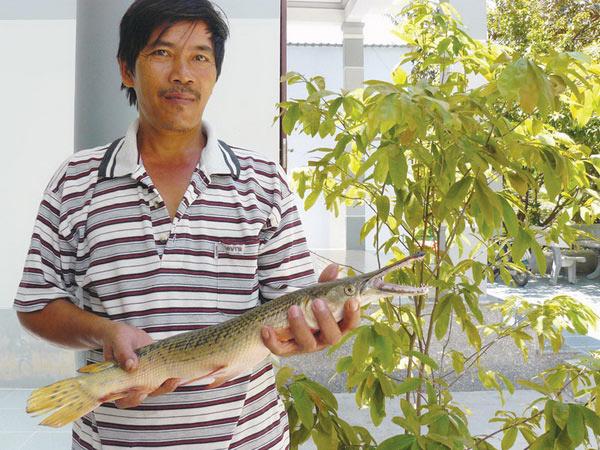 Khánh Hòa: Bắt được con cá đầu cá sấu, vảy rắn - 1