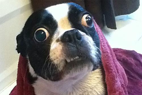 Chú cún lập kỷ lục thế giới vì mắt to - 1