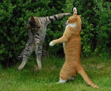 Những chú mèo ngộ nghĩnh! - 1