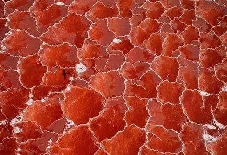 Lạ mắt hồ muối như ghép từ trăm tấm kính đỏ - 1