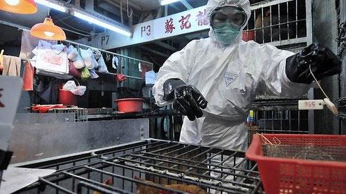 Cúm A/H7N9: Không lây từ người sang người - 1