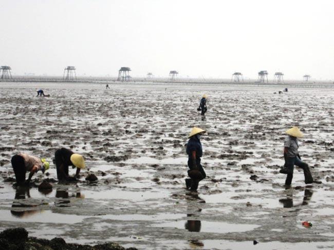 Mùa vụ bắt cá Còi chủ yếu vào thời điểm tháng Giêng đến tháng 5 âm lịch vì đây là mùa sinh sôi của cá