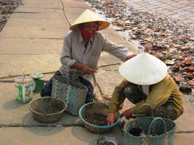 Được biết, giá bán cá Còi bình thường dao động từ 100 - 130 nghìn đồng/kg, có những hôm lên đến 200- 300 nghìn đồng/kg tại bờ biển.