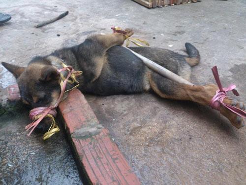 Ăn thịt chó ảnh hưởng gì đến đạo đức? - 1