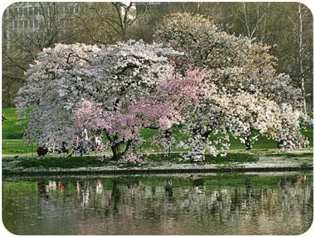 Ngắm London ngập tràn sắc hoa - 1