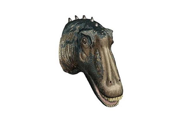 Khủng long cười. Loài khủng long Kaatedocus được phát hiện tại Wyoming, Mỹ. Chúng có hàm răng trông như những chiếc bút chì ở phần mõm trên. Do những chiếc răng này không dùng để nhai nên nhiều nhà khoa học, trong đó có nhà cổ sinh học hàng đầu thế giới Octavio Mateus, cho rằng, răng được dùng để nghiền nát đá.