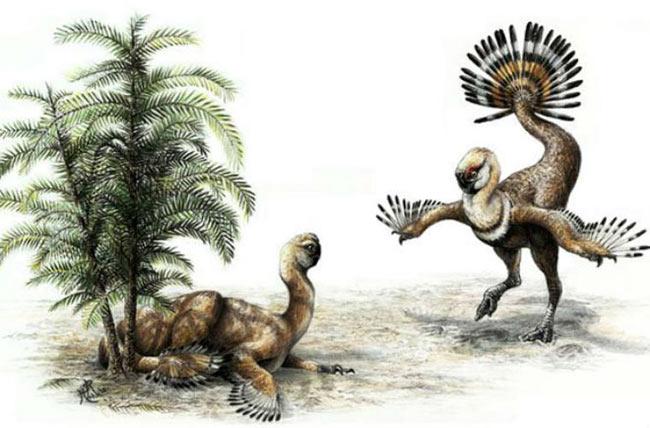 """Vũ công sặc sỡ. Oviraptor là một loài khủng long sống ở kỷ Phấn trắng. Chúng có lông và nhiều nhà khoa học cho rằng bộ lông này được dùng để """"khoe mẽ"""" khi tán tỉnh bạn tình- một đặc điểm khá giống với công và gà tây."""