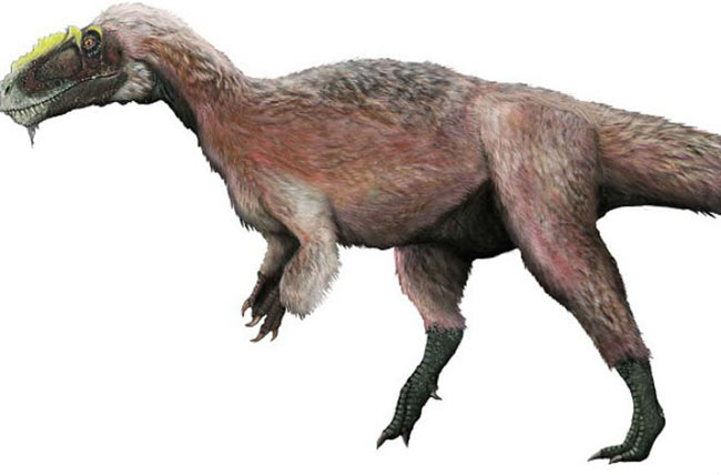 Khủng long lông. Cũng giống như các loài chim hiện nay, không phải loài khủng long nào cũng nhẹ cân. Loài khủng long bạo chúa này có tên khoa học là Yutytannus huali, sống ở Trung Quốc 65 triệu năm trước. Chúng có thể dài tới 9m và nặng hơn 1 tấn.