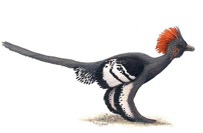 Khủng long Mohawk. Loài khủng long Mohawk, hay còn gọi là khủng long Anchiornis huxleyi, có bộ lông mao và những dải sọc đặc trưng. Chúng sống cách đây khoảng 150 triệu năm. Là loài khủng long nhỏ, co lông, 2 chân, nặng chứng 110 grams, có lông mày nâm đen hoặc đen, cánh thì có thêm nhiều dải sọc. Lông mao của chúng có màu đỏ nâu và có vết lốm đốm trên mặt.