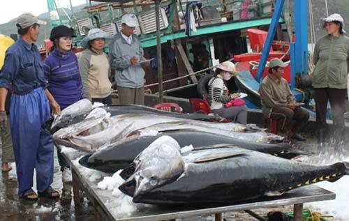 Xuất khẩu cá ngừ có thể đạt kỷ lục - 1