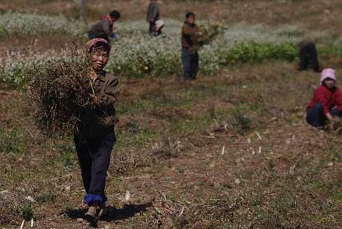 Triều Tiên xin Mông Cổ viện trợ lương thực - 1
