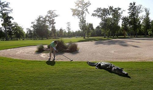 Chuyện lạ: Chơi golf cùng… cá sấu - 1