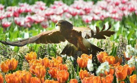 5 lễ hội hoa tuyệt vời trên thế giới - 1