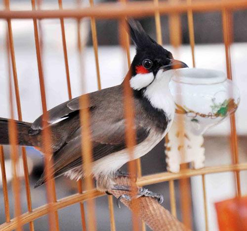Cà phê chim, thú vui người Sài thành - 1