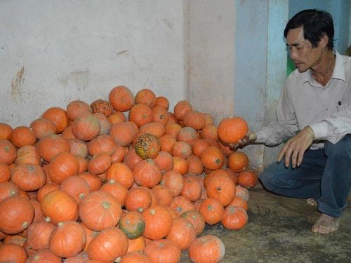 Nông dân khổ sở với giống cây Trung Quốc - 1