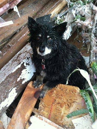 Lốc xoáy ở Mỹ: Chú chó không chịu rời xác chủ - 1