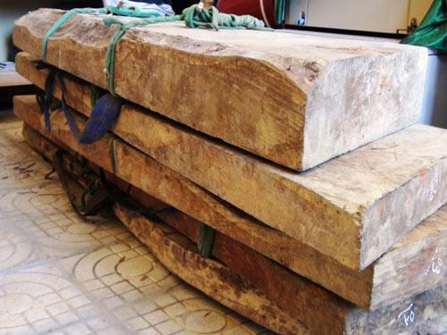 Xét xử vụ đốn hạ gỗ sưa trăm tỷ - 1
