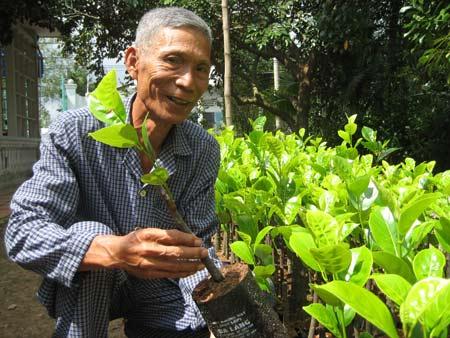 Nhà vườn đổ xô mua cây giống đặc sản - 1