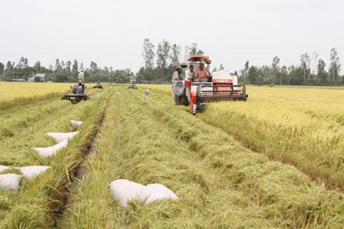 Thủ tướng phê duyệt Đề án tái cơ cấu nông nghiệp - 1