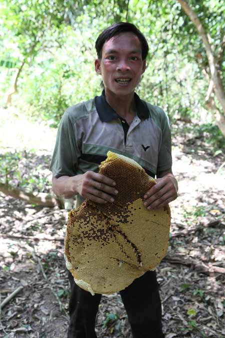 """Săn ong mật: Nghề của những """"lá gan lớn"""" - 1"""