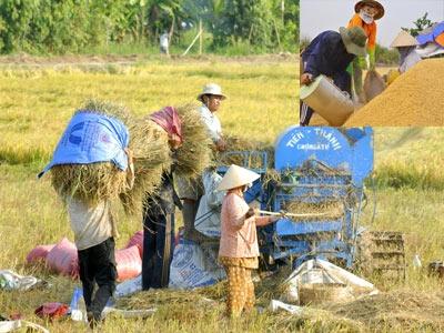 Quanh việc mua 1 triệu tấn gạo cứu nông dân - 1