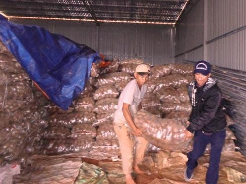 Phát hiện 26 tấn khoai tây TQ nhiễm độc - 1