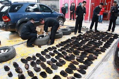 Trung Quốc phá vụ buôn lậu hàng trăm tay gấu - 1