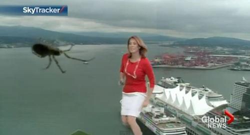 """Video: MC bị sốc vì nhện """"khổng lồ"""" - 1"""