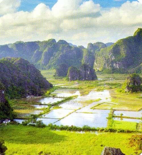 Về Tam Cốc ngắm vẻ đẹp của bông lúa Việt - 2