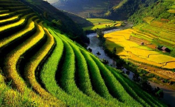 Ruộng bậc thang đẹp như tranh vẽ ở vùng núi phía Bắc Việt Nam. Ảnh:  Tho Le Duc/ nationalgeographic.com
