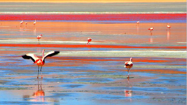 Hồ chứa hàm lượng muối cao, màu đỏ của hồ có nguồn gốc từ tảo và các loài sinh vật khác. Đặc biệt, đây còn là nơi mà chim hồng hạc chọn làm nơi sinh sản.