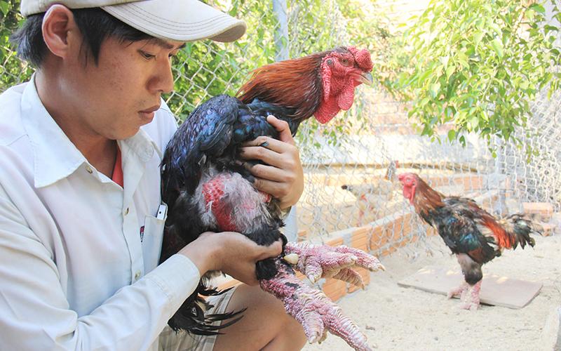 Cử nhân xây dựng thu trăm triệu từ gà hiếm, chim quý - 1