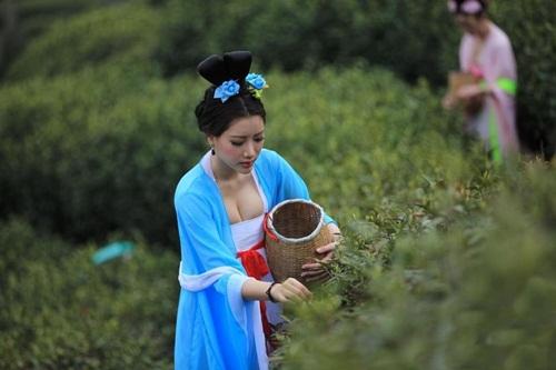 Thiếu nữ Trung Quốc ăn mặc nóng bỏng đi hái trà - 1
