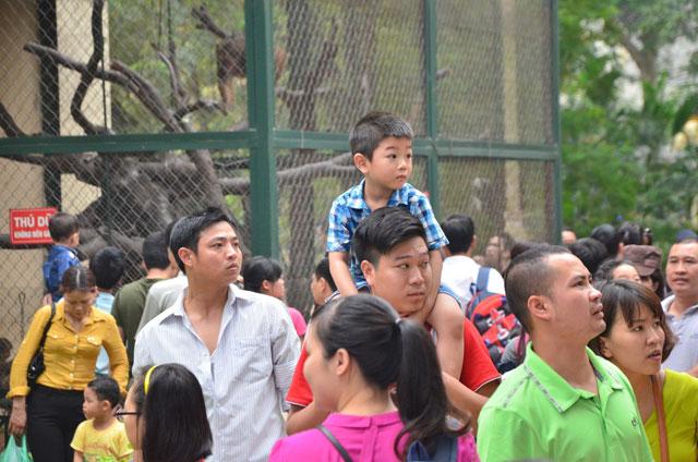 Công viên quá đông, bố cõng con lên cổ xem muông thú - 1