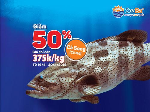 Đến Seaba, ăn cá Song thả ga, giá chỉ còn 50% - 1