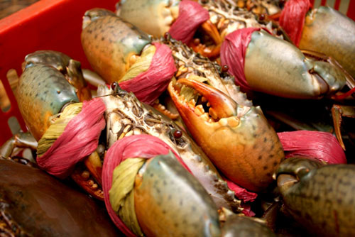 15 món ăn hải sản ngon nổi tiếng không nên bỏ qua - 3